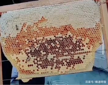 中蜂蜜为什么价钱比较高?