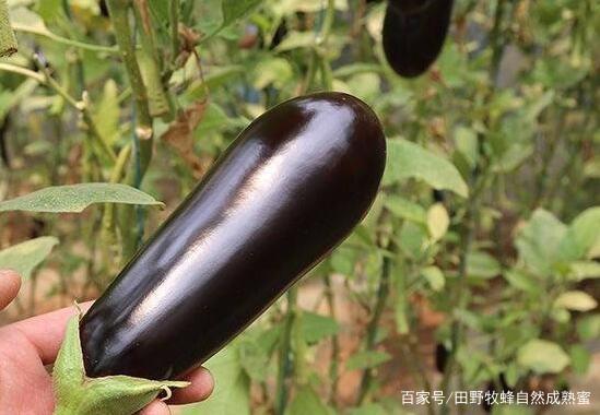 茄子和蜂蜜贴脸能祛痘痘吗?