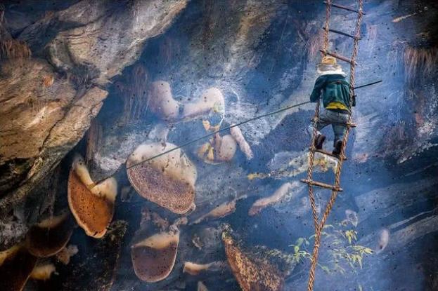 世界上最珍贵的蜂蜜:百米高空拿命换,有人出天价却坚决不卖