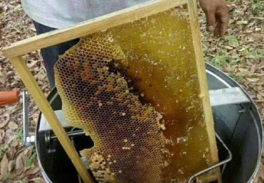 怎样辨别蜂蜜真假?老蜂农透露:买蜂蜜时注意4点,真假一目了然