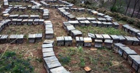 为什么土蜂蜜卖得比意蜂蜜更贵?