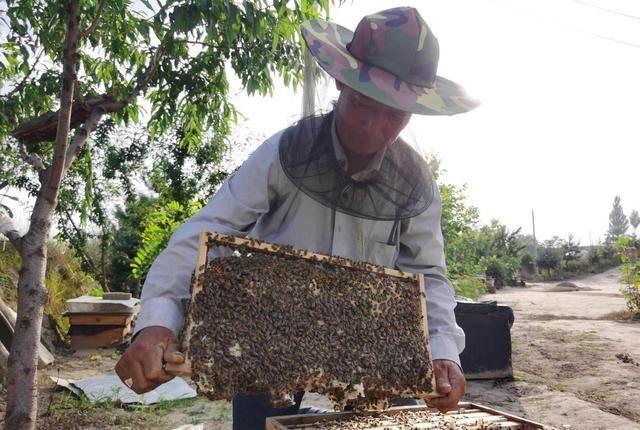 70年代的高中生扎根大山养蜂,酿造甜蜜人生